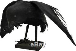 Morris Costumes Halloween Raven Animals Small Decorations & Props. FW8423