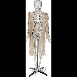 Standing Life Size ANIMATED TALKING HUMAN SKELETON Halloween Haunted House Prop